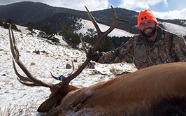 Colorado Elk, Antelope and Mule Deer Hunts